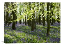 Ancient Woodland Bluebells in Late April, Canvas Print