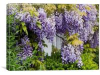 Wisteria Covered Wall, Canvas Print