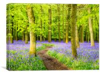 Bluebell Evening, Canvas Print