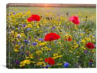 Chenies Wildflowers in July, Canvas Print