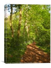 Portrait of a Dappled Woodland Glade in Spring, Canvas Print