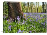 Bluebells in a Sunny Wood, Canvas Print