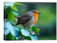 Robin at the window, Canvas Print
