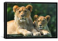 Big Cats, Canvas Print