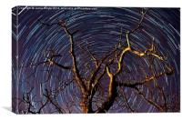 Star Trails, Canvas Print