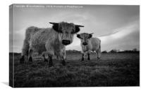 High Park Cow Mono, Canvas Print
