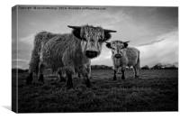 Two Shaggy Cows, Canvas Print