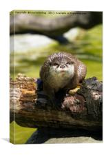 Otter On A Tree Trunk, Canvas Print