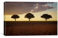 Three Trees At Golden Hour, Canvas Print