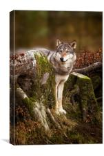 Grey Wolf, Canvas Print