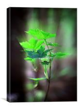 Spring Is Here, Canvas Print