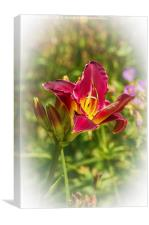 Beautiful red day lily , Canvas Print