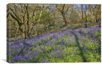 Bluebell hillside, Canvas Print