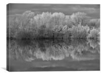 Infrared Reflections, Canvas Print