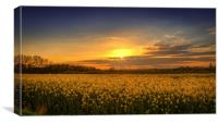 Sunset over the Yellow Fields, Canvas Print