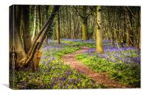 Bluebell Path All The Way, Canvas Print