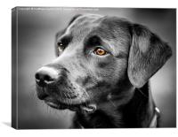For The Love Of Labradors, Canvas Print