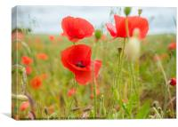 Poppies In The Breeze, Canvas Print