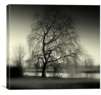 Weeping Willow, Canvas Print