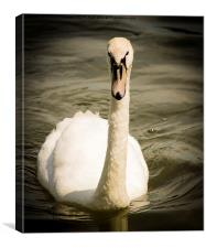 The Swan at Leybourne Lakes, Canvas Print