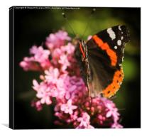 The Butterfly, Canvas Print