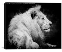 King of the Jungle, Canvas Print