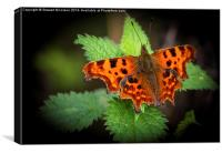 Beautiful Comma Butterfly , Canvas Print
