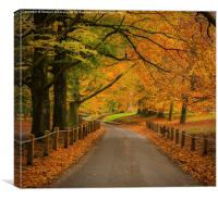 Autumn at Mote Park , Canvas Print