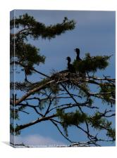 Vultures in a tree, Canvas Print