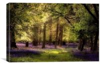 Sunlight on the Bluebells, Canvas Print