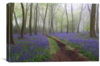 Misty Bluebell Woods, Canvas Print