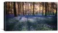 Spring Bluebell Woodlands, Canvas Print