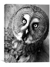 Black and White Owl, Canvas Print