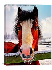 Snowy Whiskers., Canvas Print