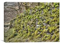 Moss on a drystone wall, Canvas Print