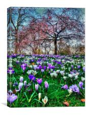 Springtime in the Park, Canvas Print