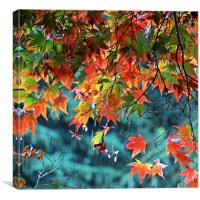 Rainy Autumn Acer at Westonbirt, Canvas Print