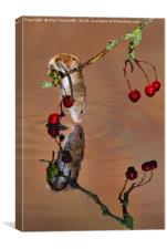Harvest mouse taking a drink, Canvas Print