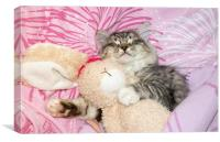 sleeping kitten cuddling up to soft toy bunny, Canvas Print