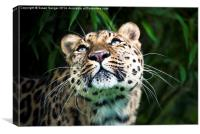 Leopard lashes, Canvas Print