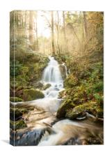 A Woodland Walk by the Waterfall, Canvas Print
