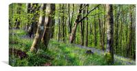 Magical Bluebell Woods, Canvas Print