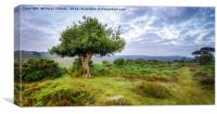 The New Forest, Canvas Print