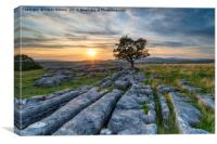 Sunset over a lonely windswept Hawthorn tree on a , Canvas Print
