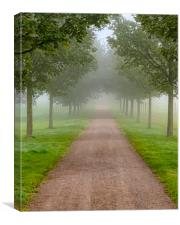 Foggy Morning Country Tree Line Path, Canvas Print