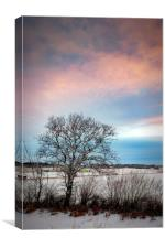 Lonely Winter Tree at Sunrise, Canvas Print