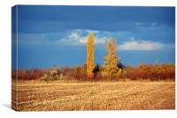 Autumnal yellow trees, Canvas Print