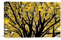 Tree of Golden Leaves, Canvas Print