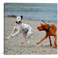 Two Dogs Playing on the Beach , Canvas Print
