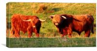 Two Highland Cows, Canvas Print
